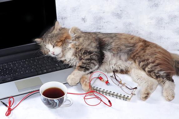 Cat work in progress